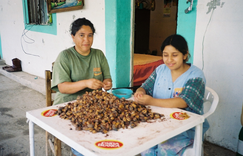 Shelling pecans, Casillas. The senora served me a lunch of frijole empanadas while I waited out a rain storm.