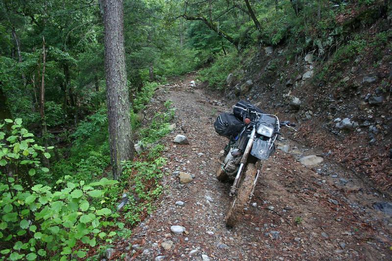 Road from Buena Vista to Purisima