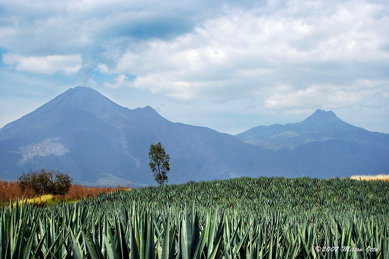 Volcanoes and maguey