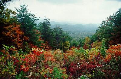 Blue Ridge Pkwy, NC, Oct, 2000