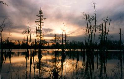 Horseshoe Lake NWR, Illinois, apr1997
