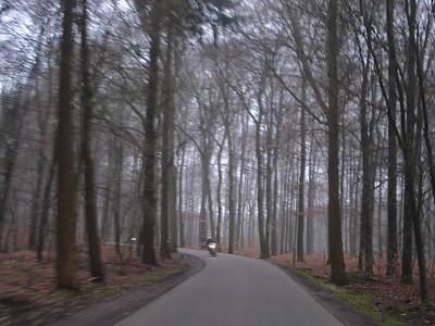 De mystieke wouden van de Veluwe zijn in nevelen gehuld