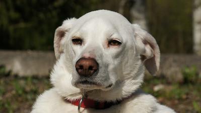 Een Bodengo hond Heeft nog in Griekenland op straat geleefd. Nu een plekje bij liefhebbende nieuwe baasjes. Net een dag in de Harz en nog even aan het wennen. Lekker rondlopen in een ruime omgeving Lekker hondenleven toch?