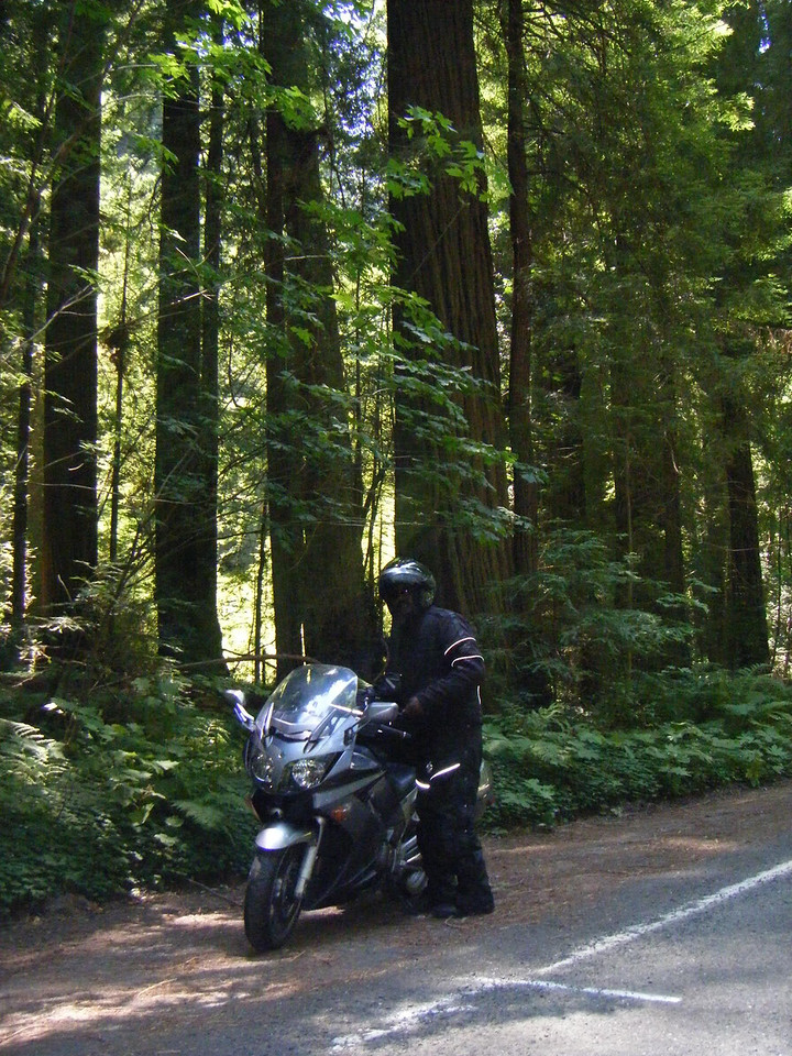 Corey along side the Giant redwoods Hwy 1 CA