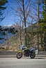 Spring ride to Harrison Hot Springs. The tiger blends into the background.