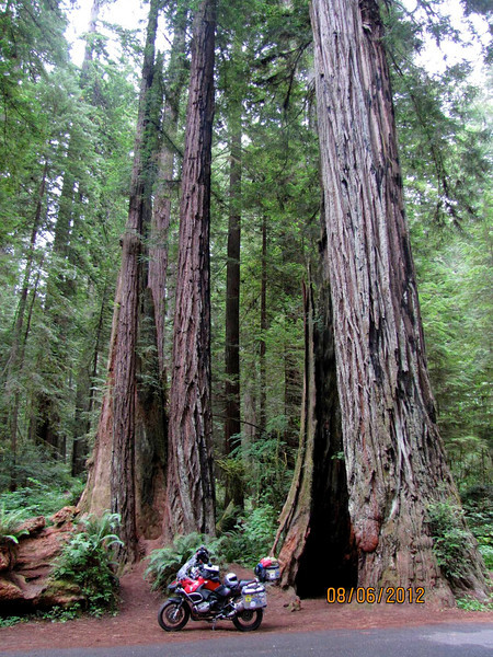 The Redwoods, Northern California