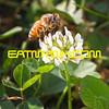 Bee_NHDROaug14_6318cropHDR