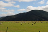 First view of NZ sheep paddock