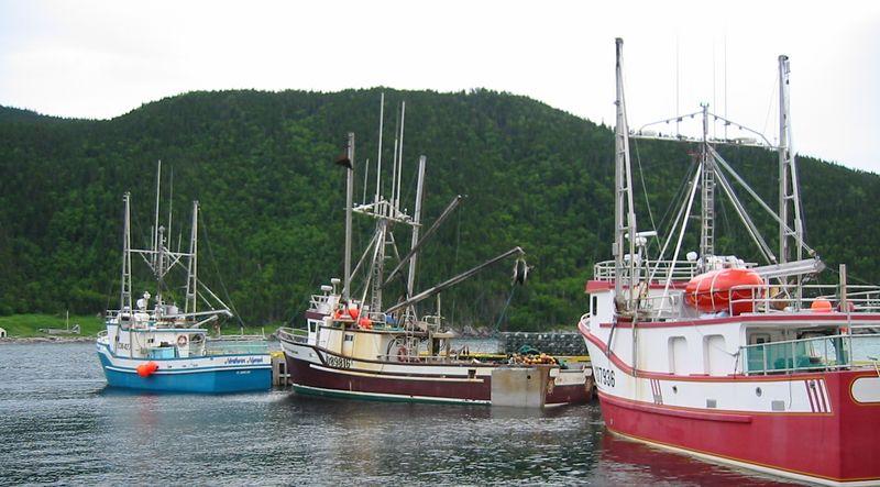 The fleet at Wild Cove