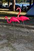 Pink Flamingo\'s????