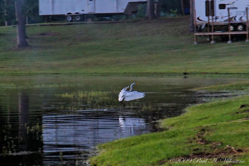 East Texas Landscapes 10-03-09