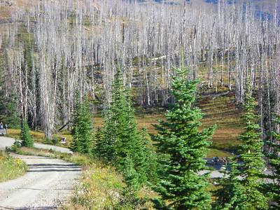 Meadows CG at Hart's Pass