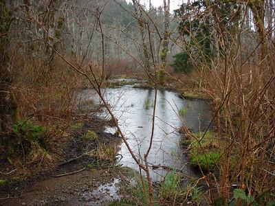 Beaver dam on Penny Crk