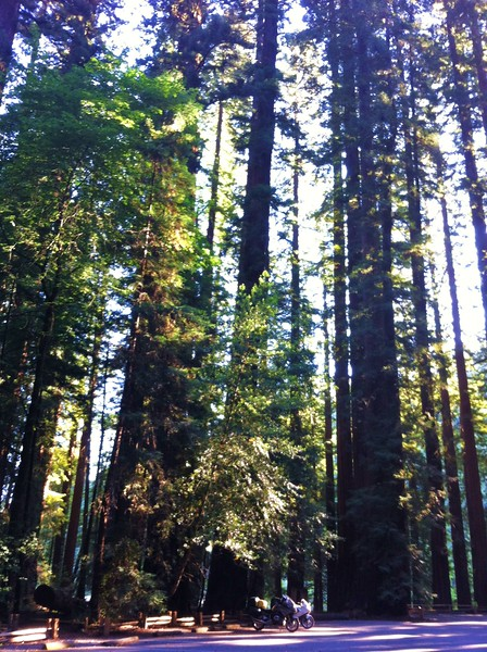Richardson Grove State Park, CA