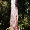 Jedediah Smith Redwoods State Park, CA