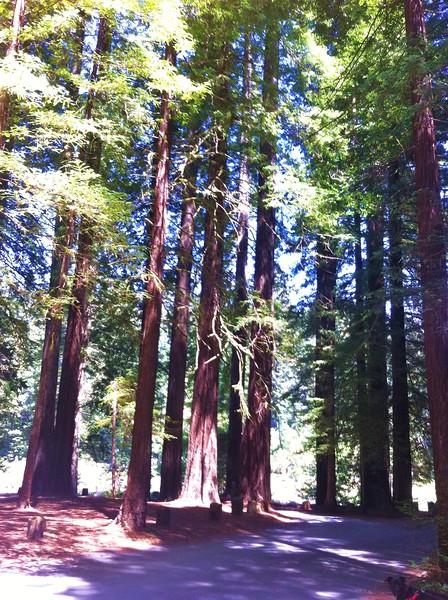 Jedediah Smith Redwoods State Park, CA