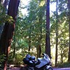 Richardson Grove Campground, CA