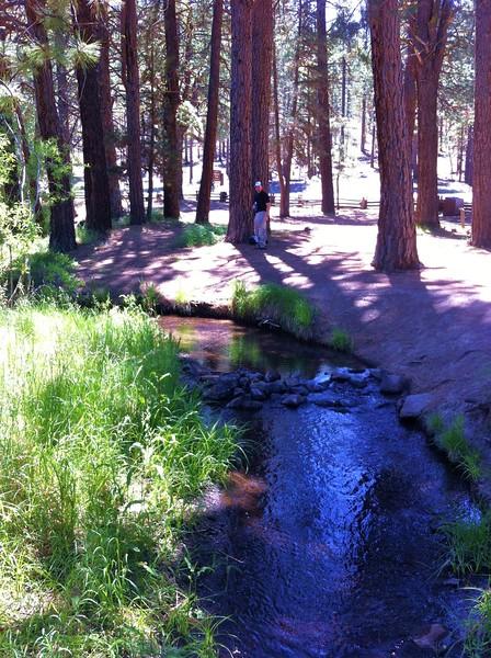 Willow Creek Picnic Area along CA-139