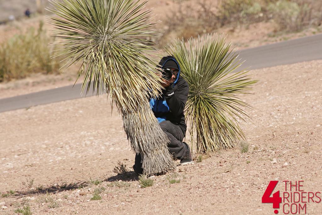 toe hiding behind cactus