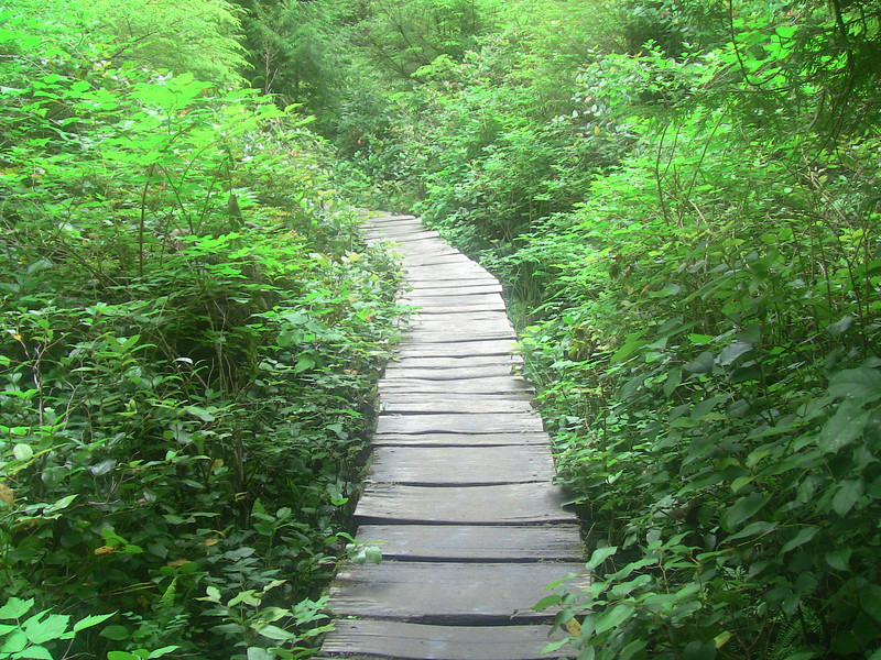 Neah Bay boardwalk to Cape Flattery lookout.