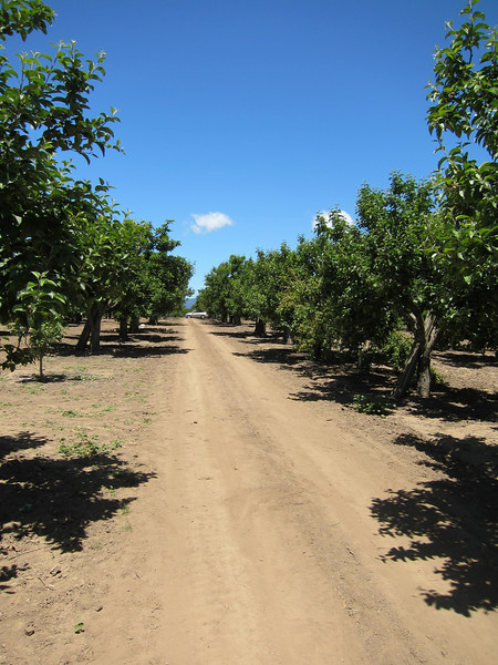 pie orchard