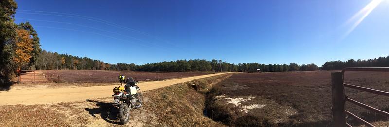 PB500 Cranberry Bog