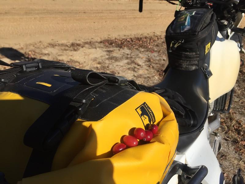 PB500 Cranberry Bog Berries