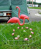 These flamingos were out of their element in the upper 50-degree temperatures, but they still tended their little ones and two eggs in the lush grass of the campground.