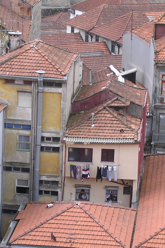 Cats on roof in Porto, Portugal.