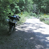FR 85 or 95 on way down from Reddish Knob