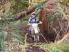 Interesting trails. James cruises under a nurse log.