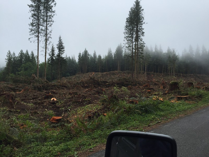Reiter Rd, Reiter Foothills Forest. Clear cut devastation.