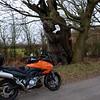 Ancient Oak Tree, Broadoak Lane, High Leigh.
