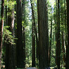 Humboldt Redwoods State Park, <br /> near the Avenue of the Giants