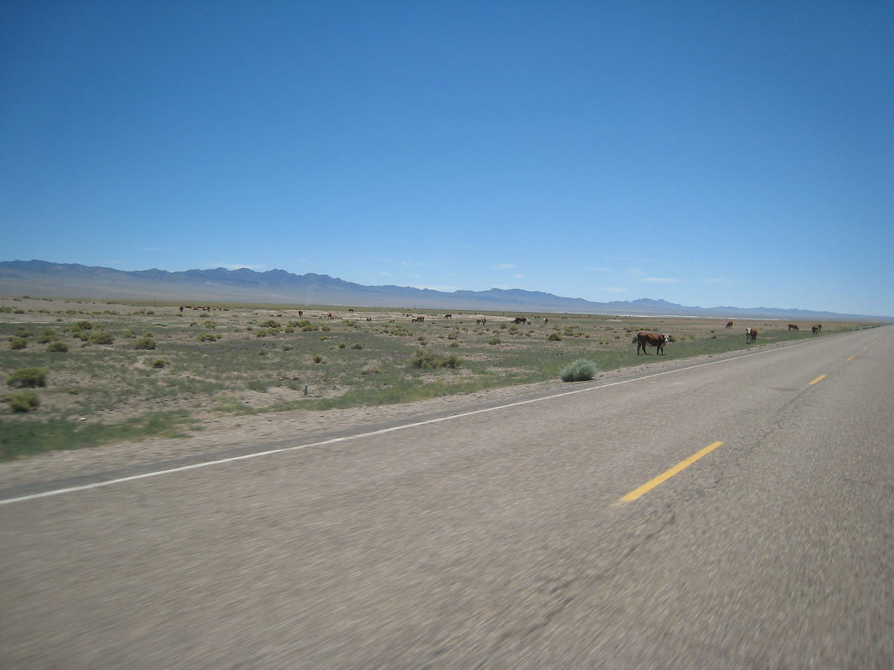 "Turning onto the Extraterrestrial Highway, I set the cruise control at a, um, ""brisk"" speed.  Much of Nevada is open range, however, and I do have to dial it down as I approach a group of locals..."