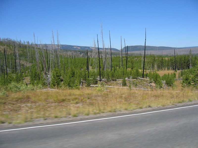 The next morning me head to Yellowstone.  As we approach the south end of the park, evidence of the forest fire are everywhere.<br /> <br /> Living in Colorado, I am used to seeing forest fire damage.  However, the massive size of the burned area in Yellowstone amazes even me.  I've not seen so much fire damage, not even along the Pine Valley Highway in Colorado (home to about five fires over the years).