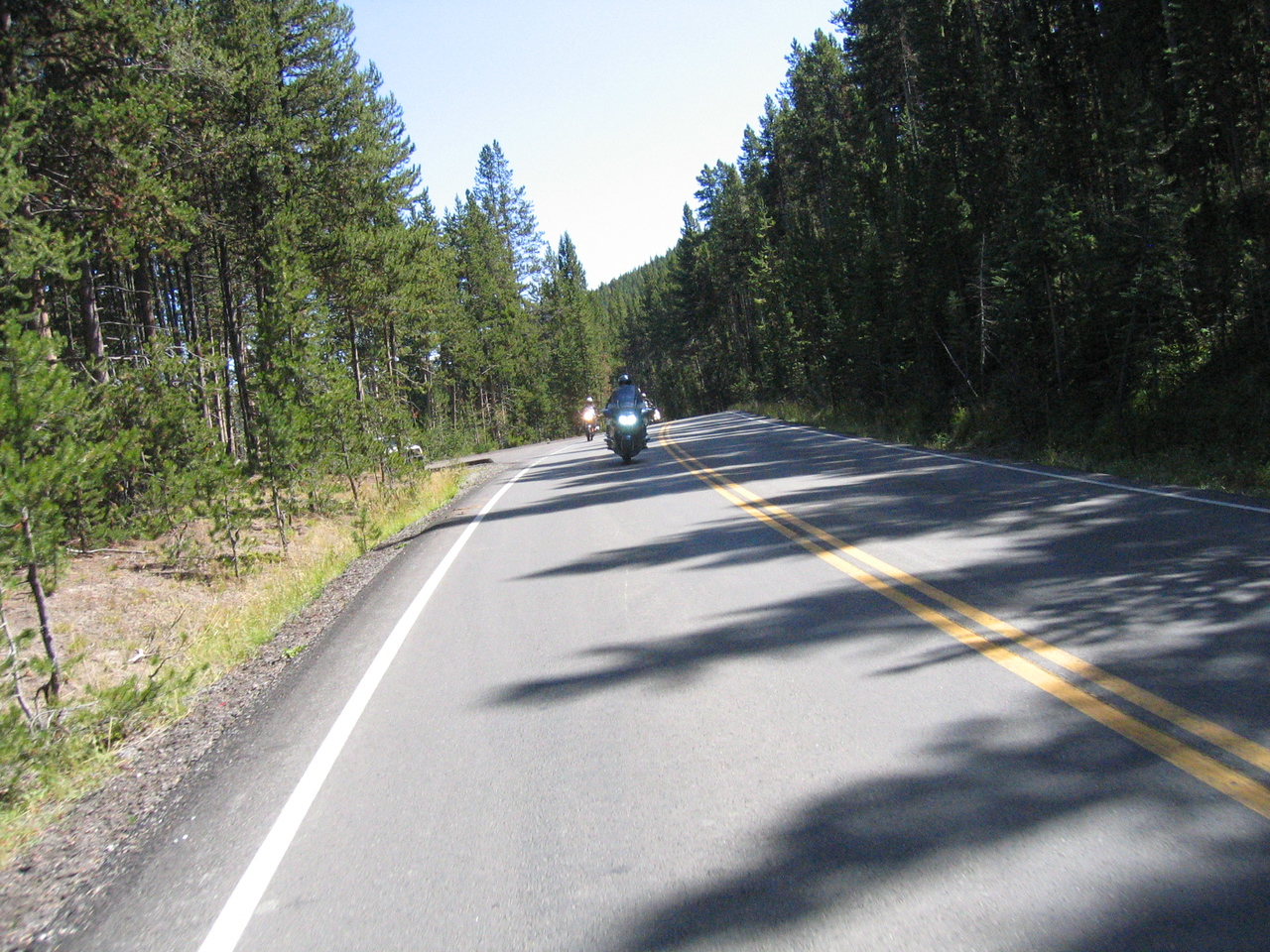 Rolling through the trees of Yellowstone.