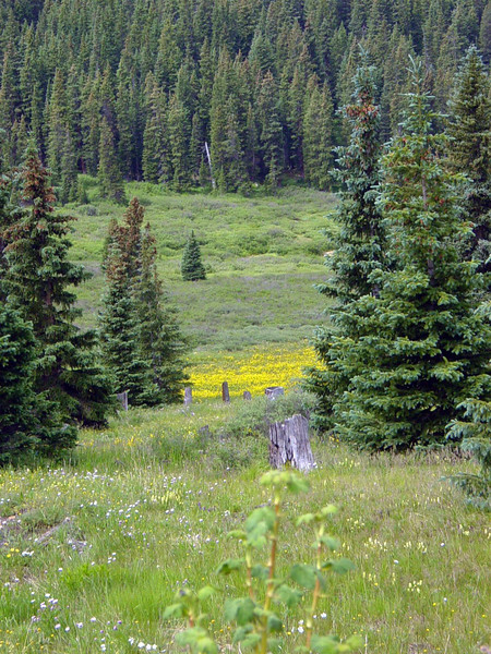 Wildflowers on top of Boreas Pass
