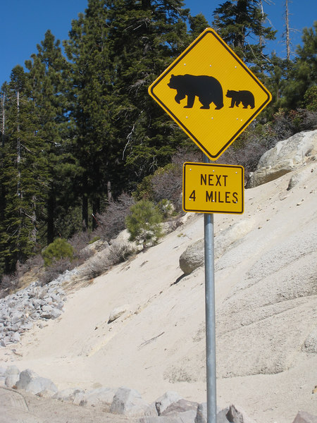 """Fortunately, I didn't encounter any of these today.<br /> <br /> The """"bear crossing"""" signs make me smile.  I'm used to seeing """"open range,"""" """"deer,"""" and even """"elk"""" signs during my time in Colorado.  <br /> <br /> It wasn't until I moved here that I saw """"bear"""" crossing signs.  While I've encountered farm animals, deer, and elk on the road, I'm not sure what I would do if I saw a bear!"""