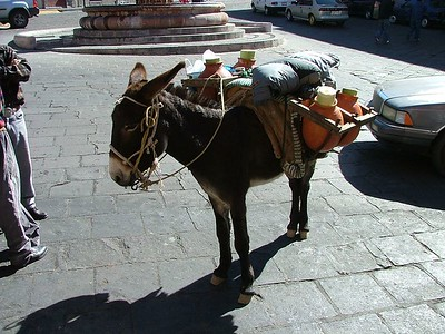 Zacatecas.  Burros selling Aquamiel.  Not my cup of tea but very cool.