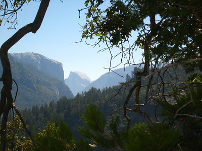 From the same location, we can see El Capitan and Half-Dome through the trees.