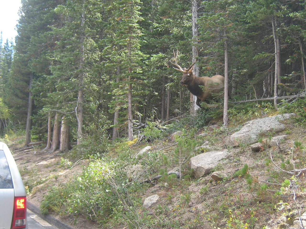 Returning from Winter Park, we head north to Estes Park.  On the east side of the park, the traffic comes to a stop.  It's clear why.  It's nearing rutting season, and I'm a bit nervous as this guy approaches the motorcycle and gives us a good look.