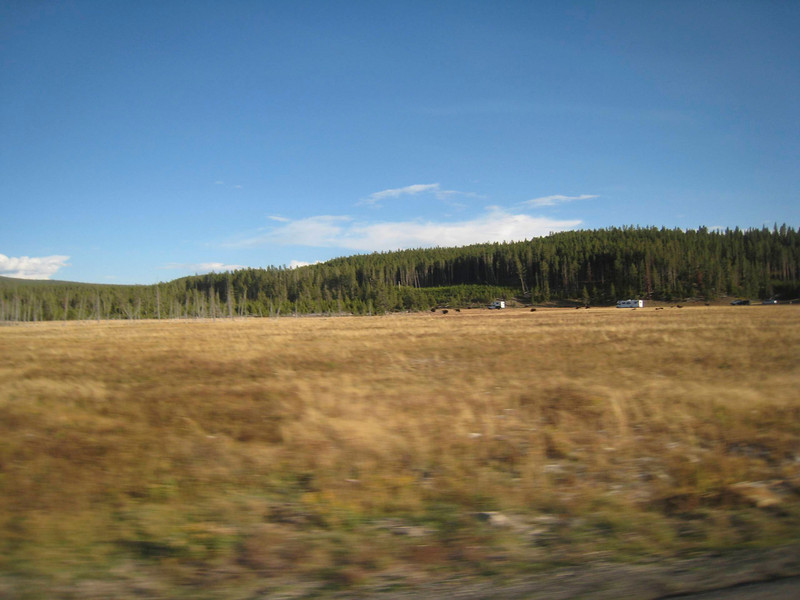 A field full of bison attracts the RV's like fly's to a picnic table.