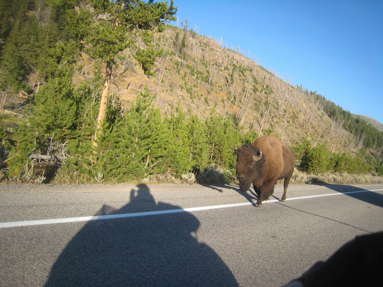 The bison ignored me.  I had to get one more pic as I rode past him, capturing my shadow in the process.