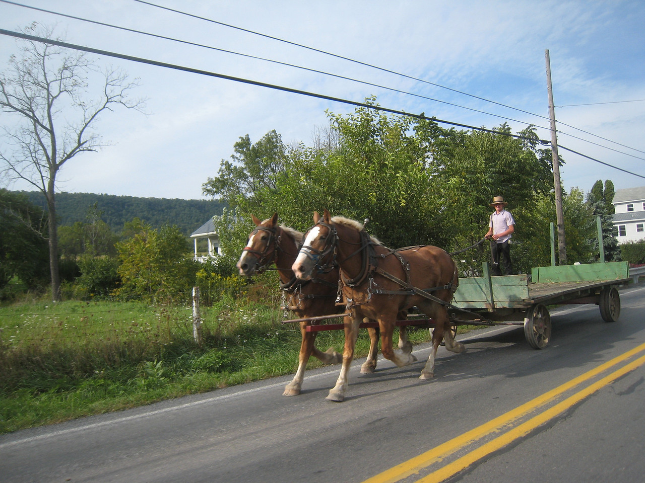 Coming home, I had other kinds of traffic to deal with.