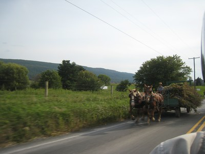 It was rush hour in Amish country!