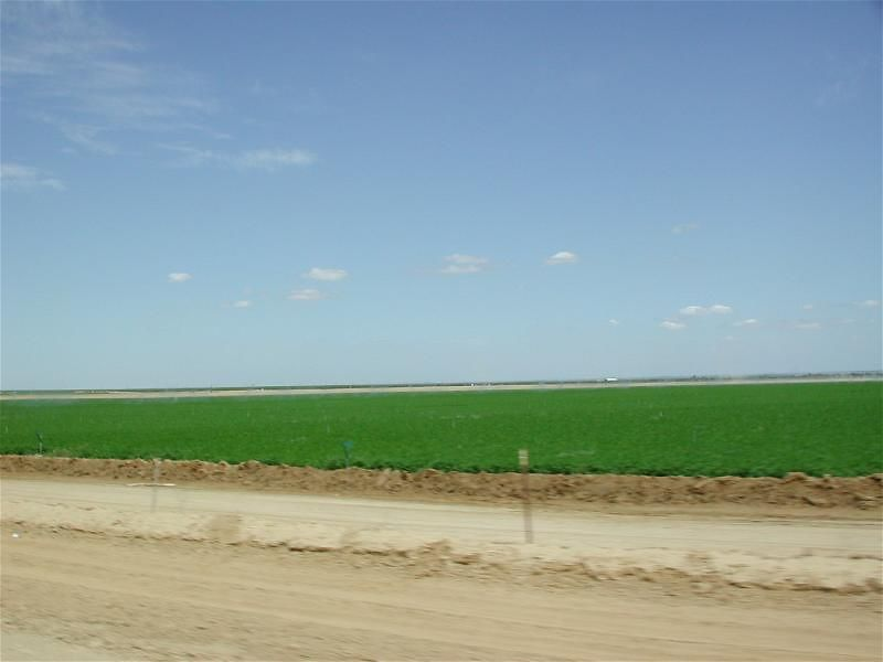 Most of the country's vegetables are grown in the San Joaquin Valley.