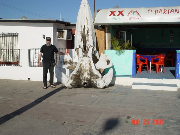 Dave standing next to a Whale skull.