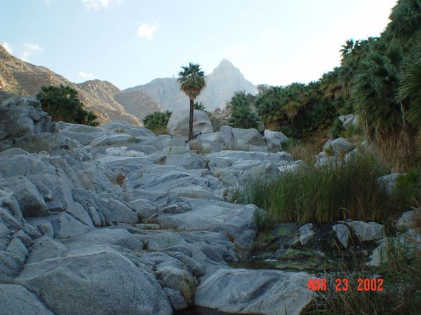 -Rocks water and palms