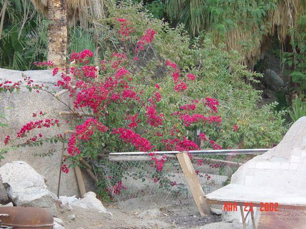 Pretty plant